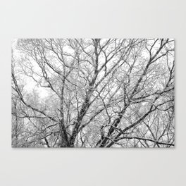 First Snow 2013 Canvas Print