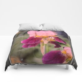Tall Bearded Iris named Indian Chief Comforters
