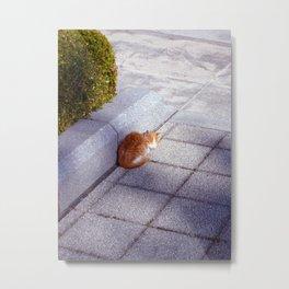 Crouching Kitten Metal Print