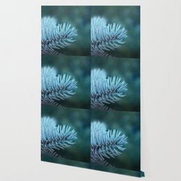 Blue spruce 2 Wallpaper