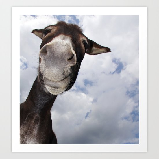Funny Donkey Art Print By Claudia Otte Artofpictures