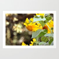 sunflowers Art Prints featuring SUNFLOWERS :) by Teresa Chipperfield Studios