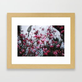 September Evening Framed Art Print