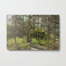 PHOTOGRAPHY / TREE 03 Metal Print