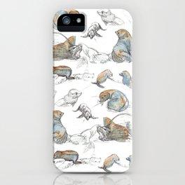 sketch of New zealand seals iPhone Case