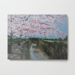 Falling Japanese Cherry Blossom - by a river in Japan Metal Print