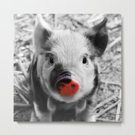 BW splash sweet piglet Metal Print