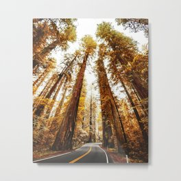 red woods forest in california Metal Print