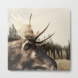 Tom Feiler Moose Metal Print