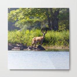 Watercolor Deer, Eastern Whitetail 07, Kejimkujic, Nova Scotia, Canada, A Shoreline Stroll Metal Print