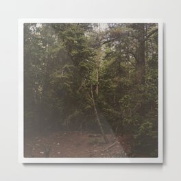 Endless forest Metal Print
