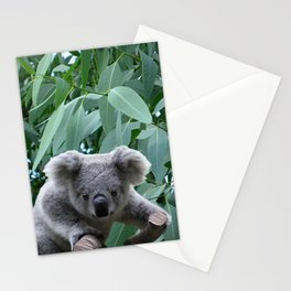 Koala and Eucalyptus Stationery Cards