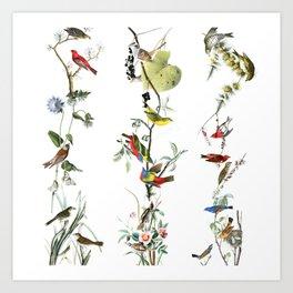 Birds - Art - Vintage - Pattern - Illustration - Nature Art Print