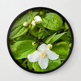 Wild Sicilian Jasmine Wall Clock