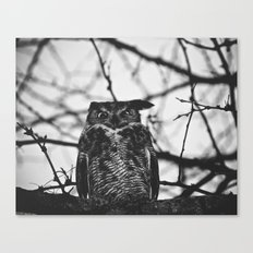 Disgruntled Owl (B&W)  Canvas Print