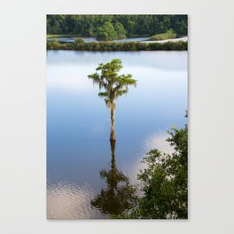 Solitary #Tallahassee Canvas Print