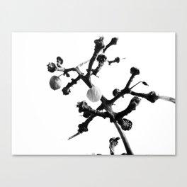 Strange Trees 4 Canvas Print