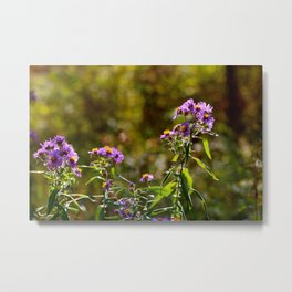 Complimentary Flowers Metal Print