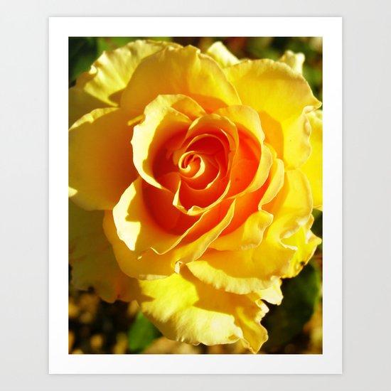 roses XVIII Art Print