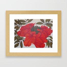 Spathodea Campanulata Framed Art Print
