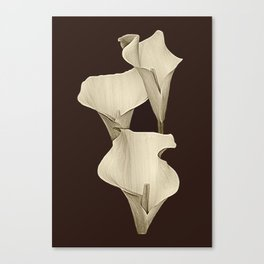 Cream Calla Lilly. Canvas Print