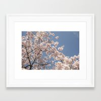 cherry blossoms Framed Art Prints featuring  Cherry Blossoms  by cescabear