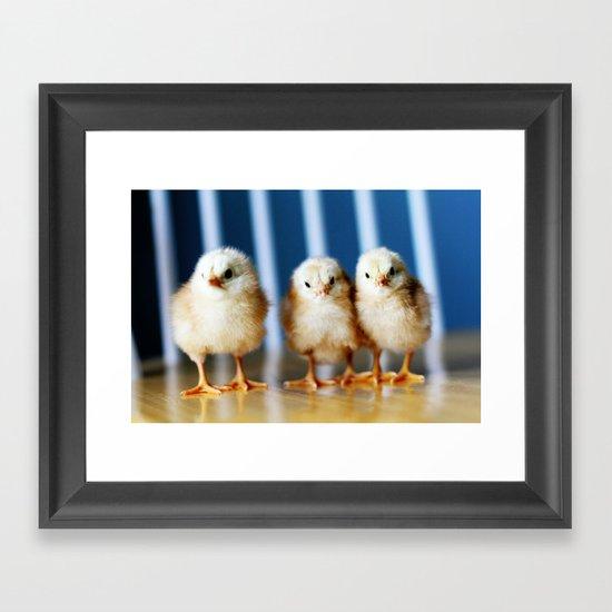 buckeye chicks Framed Art Print