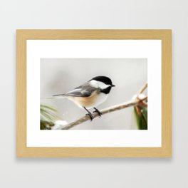 Winter Chickadee Painting Framed Art Print