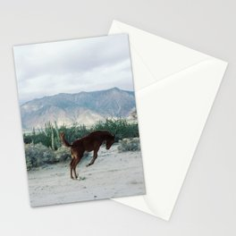 Bucking in Baja Stationery Cards