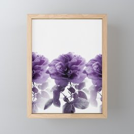 Three Roses In A Row Framed Mini Art Print
