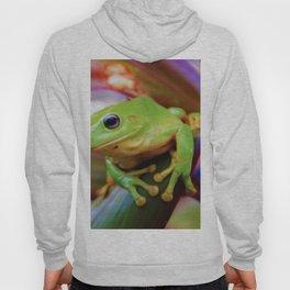 Green Tree Frog Australia Hoody