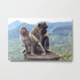 Macaques Mauritius Metal Print