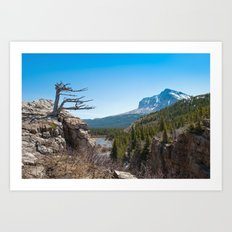 Windswept tree Art Print