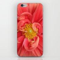 dahlia iPhone & iPod Skins featuring Dahlia by KunstFabrik_StaticMovement Manu Jobst