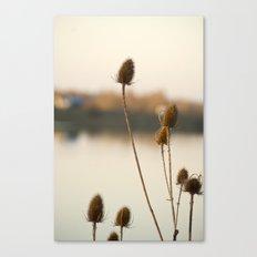 Sunny reeds Canvas Print