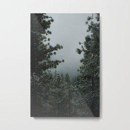 Backwoods Winter: Ponderosa Pines, Washington Metal Print