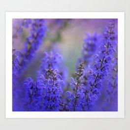 waiting for lavender blossoms Art Print