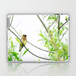 Cedar Waxwing Laptop & iPad Skin