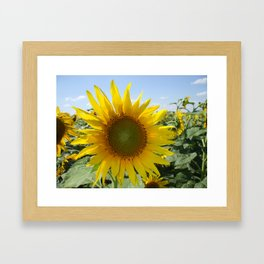Kansas Bright and Colorful Sunflower Framed Art Print