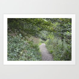 Footpath in a Forest Art Print