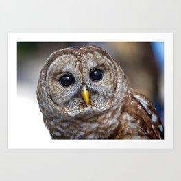 Portrait of a barred owl Art Print
