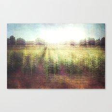 cornfields Canvas Print