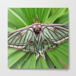 Spanish Moon Moth on Spiraling Palm Plant Metal Print