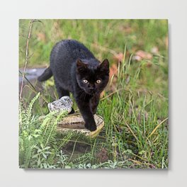 Lovely black cat walking her garden Metal Print