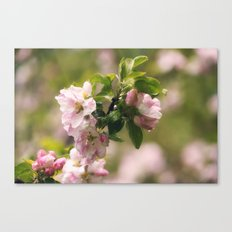 Apple blossom after Rain Canvas Print