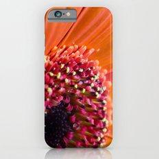 Orange Germini. Slim Case iPhone 6s