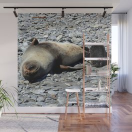 Mother Fur Seal and Pup Wall Mural