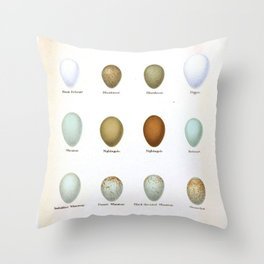 Vintage Bird Eggs  Throw Pillow