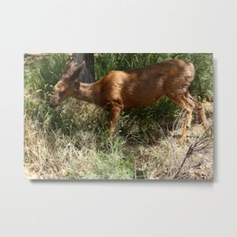 Mule Deer At Zion Park Metal Print