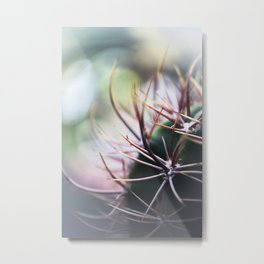 Cactus in the sunlight Metal Print